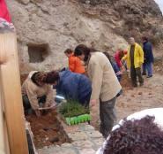 Plantando una estrecha faja de terreno en el camino del paraje del Hocino